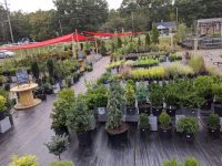 Assortment of outdoor plants and shrubs at Cultivate Garden + Harvest in Durham