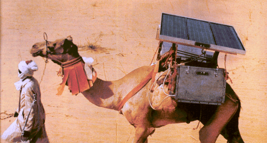 Solar power keeping a refrigerator running on a camel's back to transport vaccines